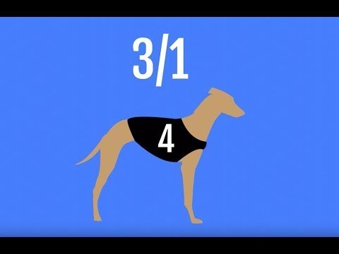Betting strategy: How to Bet on Greyhound Racing