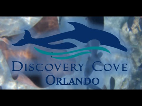 My Florida Vacation Day 5 || Discovery Cove (Part 1)