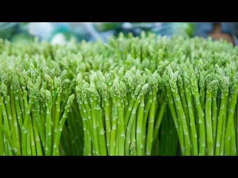12-major-benefits-of-asparagus-|-health-and-nutrition