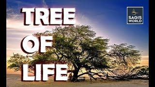 Tree of Life  Tourist attraction in Bahrain  Travel Vlog  Bahrain  Sagis world 