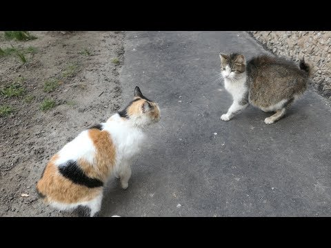 Two cats do not like each other