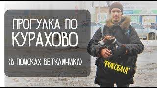 Прогулка по Курахово/ Джина покусали/Ветклиника