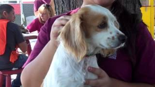 Rosie A4618178  Rescued!!!