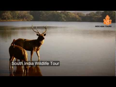 South India Wildlife Tour by Indo Asia Tours
