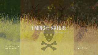 Le Cerf Pirate - 1 MINUTE NATURE - EP 07