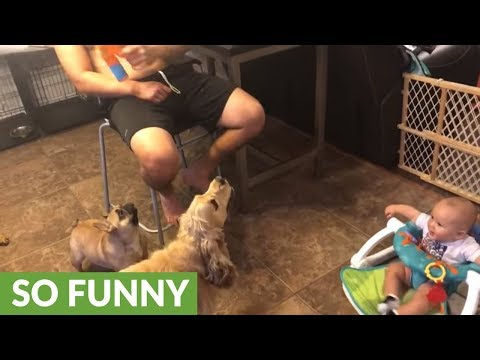 Baby thinks dogs catching bubbles is simply hysterical