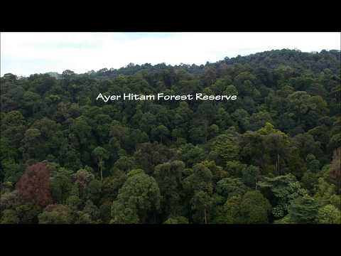 Ayer Hitam Forest Reserve ( 360 view of Bandar Puteri )
