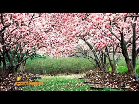 Producci n de arboles de nogal viveros espinosa doovi for Viveros arboles frutales
