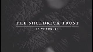 The Sheldrick Trust - 40 years on
