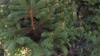 Ogrodnicze interwencje- prześwietlenie krzewów