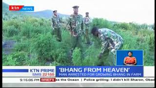 Police in Kiambu arrest a middle aged man for allegedly planting bhang on his farm