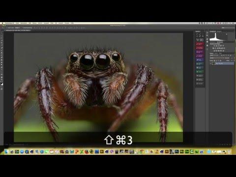 Focus Stacking ( Springspinne / Makro ) Deutsch | Adobe Photoshop CC Tutorial