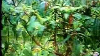 Chakma Gaan/song- Mida mida boyer bai