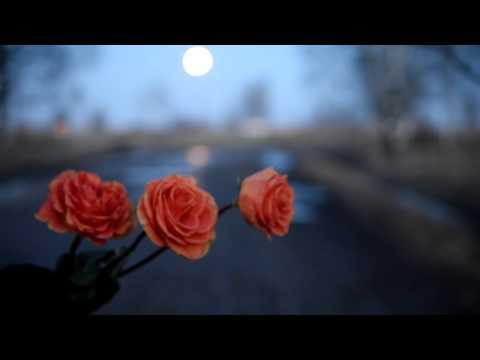 ТАЙНА НОЧИ  Морковные Розы Концовка  Футаж