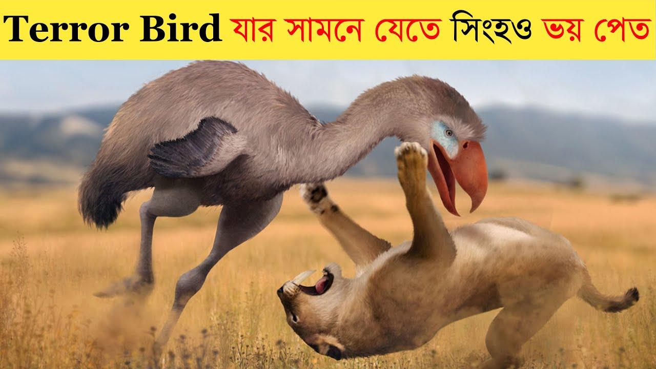 সিংহ কে মেরে ফেলা পাখি, কীভাবে উধাও হয়ে গেল ?? Amazing facts about Terror bird