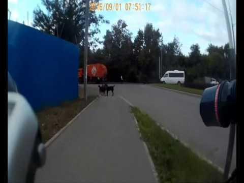 видео: Собаки и электрошокер