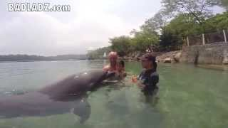 Swim with a Dolphin at Ocean Adventure Park in Subic Bay, Philippines