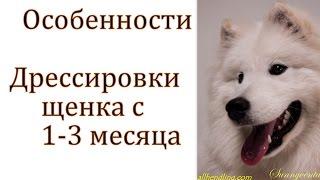 Дрессировка щенка от 1 до 3 месяцев - как правильно обучать щенка от одного и трех месяцк