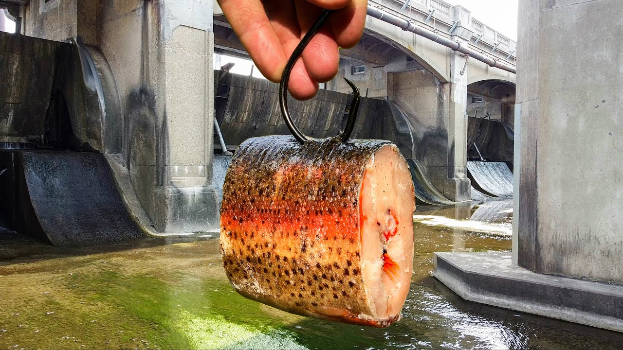 Using a GIANT CHUNK of trout in a SPILLWAY!!! (Lost Spillway of GIANTS)