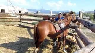 Небольшой урок для тех кто сам хочет обучить свою лошадь!