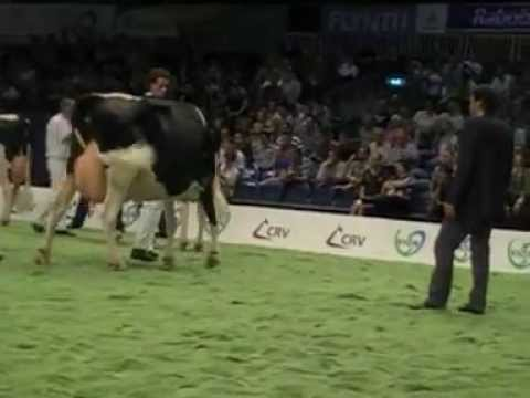 Holstein Master Sale Nr. 09
