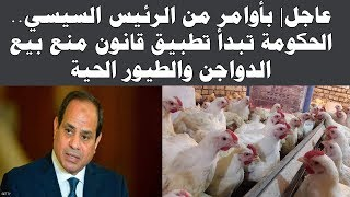 عاجل| بأوامر من الرئيس السيسي.. الحكومة تبدأ تطبيق قانون منع بيع الدواجن والطيور الحية