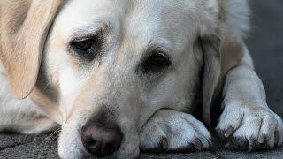 Poczuj co czuje porzucony pies...