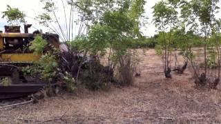 Land clearing af Green Crop Farming Ghana Ltd. (Chia Farming)