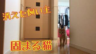 遊び途中に飼い主がいなくなった時の子猫の反応がかわいい!Deceive the cat