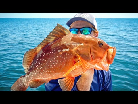 Red Grouper Catch Clean Cook Tampa Bay Offshore Bottom Fishing