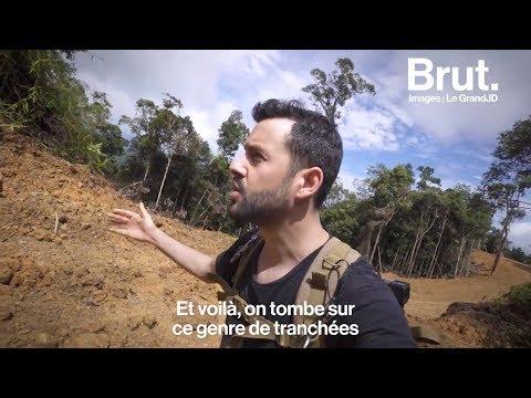 Les ravages de l'huile de palme à Bornéo : le grand JD raconte