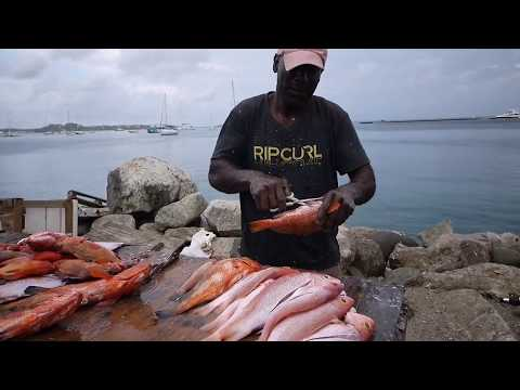 Where To Get The Freshest Fish In St. Martin