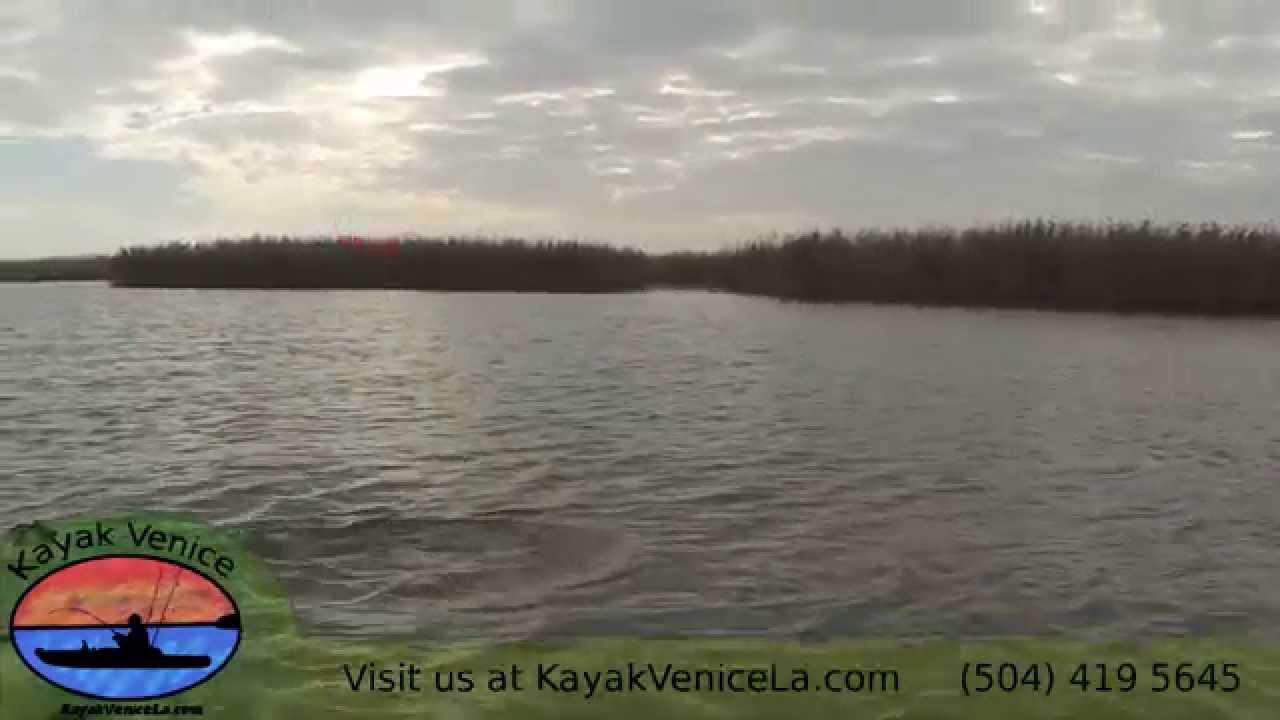 Kayak fishing venice louisiana captain brian 39 s bullred for Kayak fishing louisiana