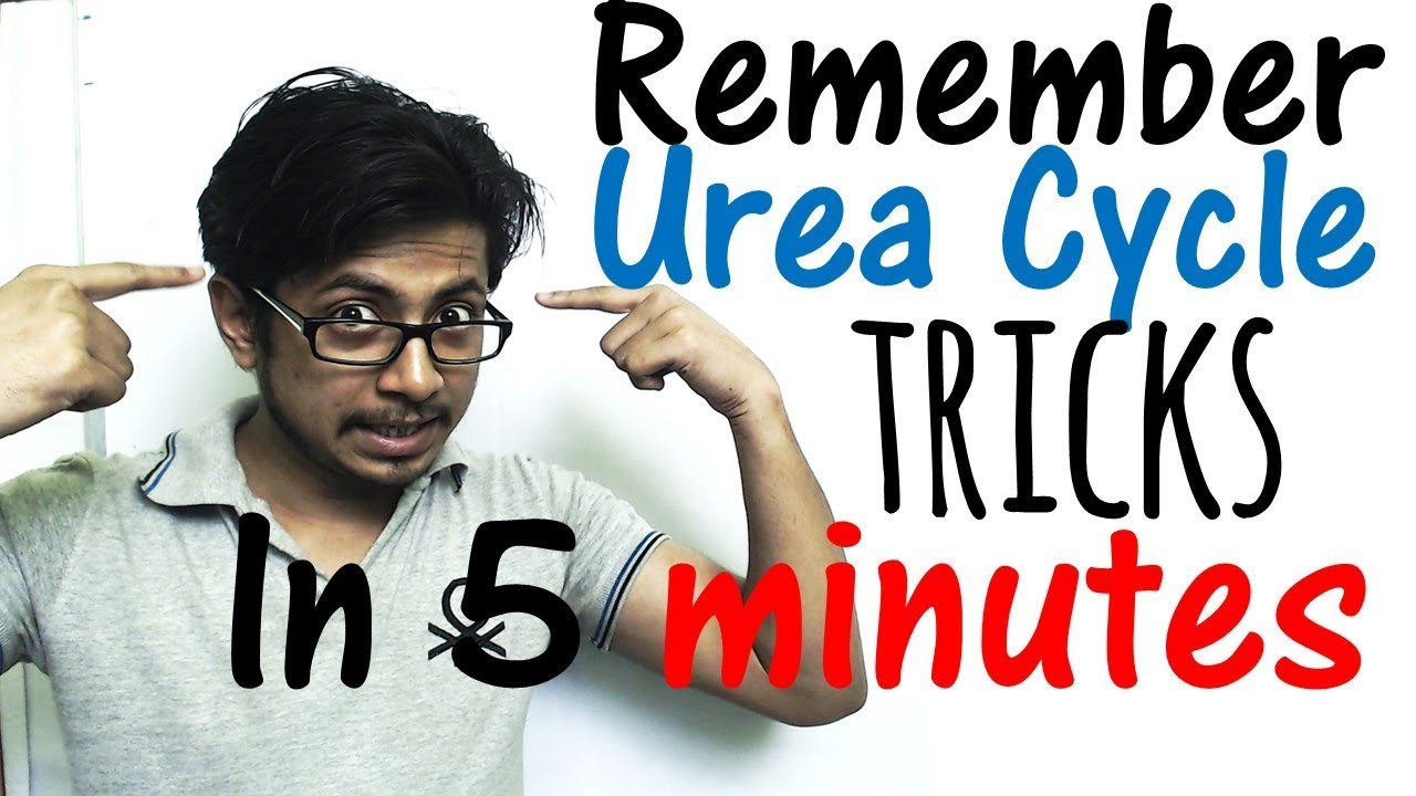 Urea cycle youtube.