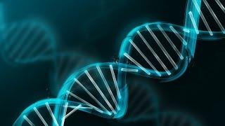ДНК, поиски Адама
