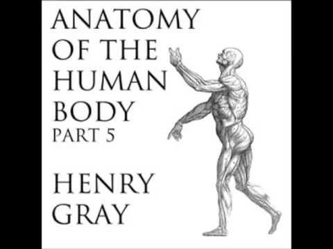 Anatomy of the Human Body (FULL Audiobook) - part (39 of 39)