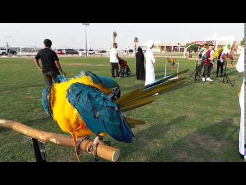 UAE Parrot Group Event . 16/12/2016 Dubai