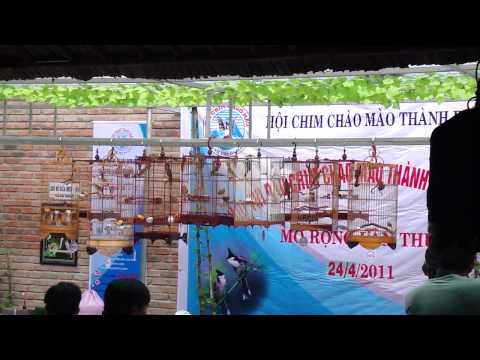 Hội thi chào mào Đà Nẵng mở rộng 2011