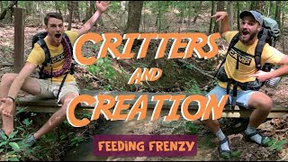 Critters & Creation 5  (Feeding Frenzy)