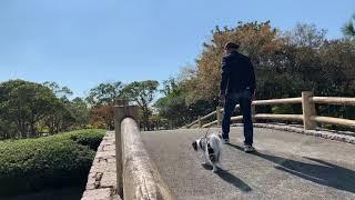 Amebaブログ「狆犬ちづひめ」2018年11月5日投稿をご覧ください。