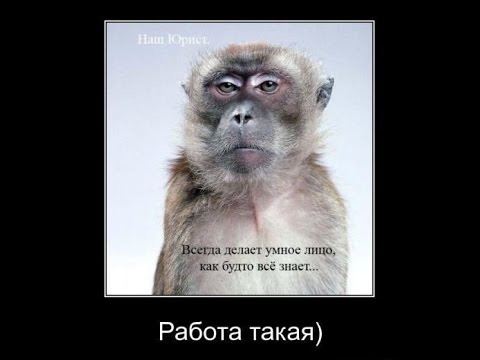 Фото приколы и картинки с цитатами: смешные фотоприколы