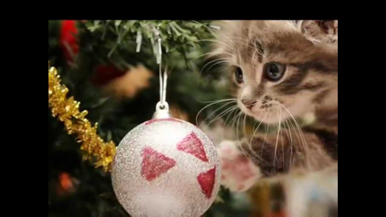 Johnny Mathis - It\'s Beginning To Look Like Christmas HD - YouTube