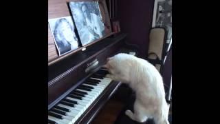 Quand Chochi (alias Chatpin) joue du piano...p.1