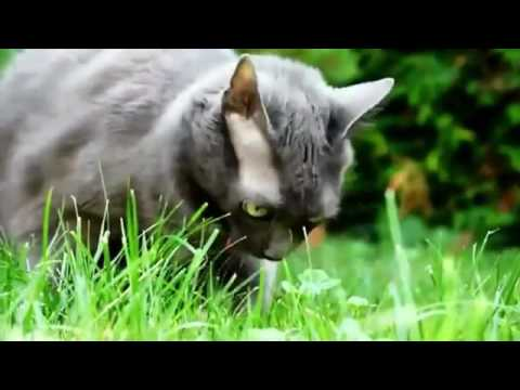 Robin Jones - Cats Puking to Techno Music