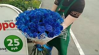 видео 51 бело-красная роза