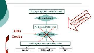 Pharmacologie des AINS et des corticoïdes_Cours commenté