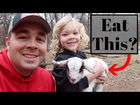 Why Eat Goat Meat? Because It's AMAZING!