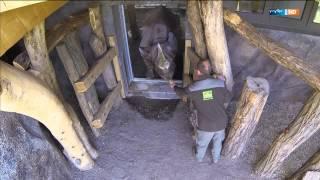 Das letzte Nashorn | Elefant, Tiger & Co. (621) | MDR