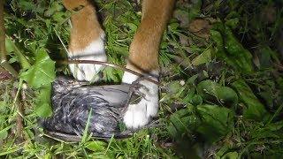 Собака ест птичку, ночь