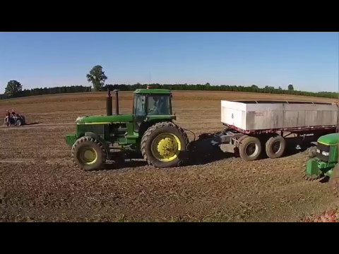 Tomato Harvesting  2014 September- Janssens Farms Dresden Ontario